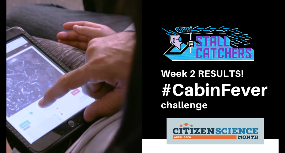 Week 2 of #CabinFever - leaderboards!