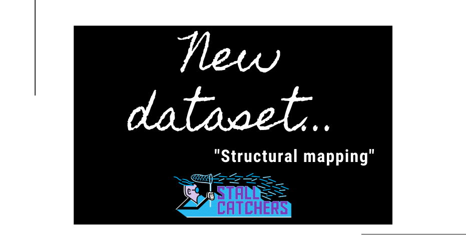 "New Stall Catchers dataset: ""Structural mapping"" 🧠"